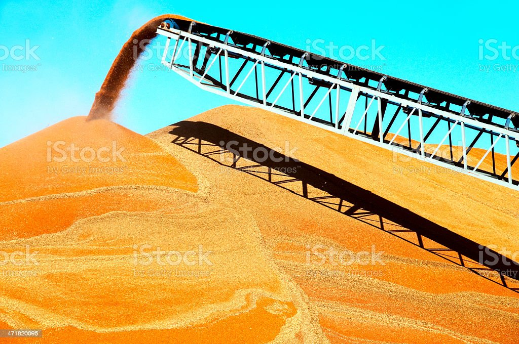 Sorghum pouring from conveyor belt onto pile in Kansas royalty-free stock photo