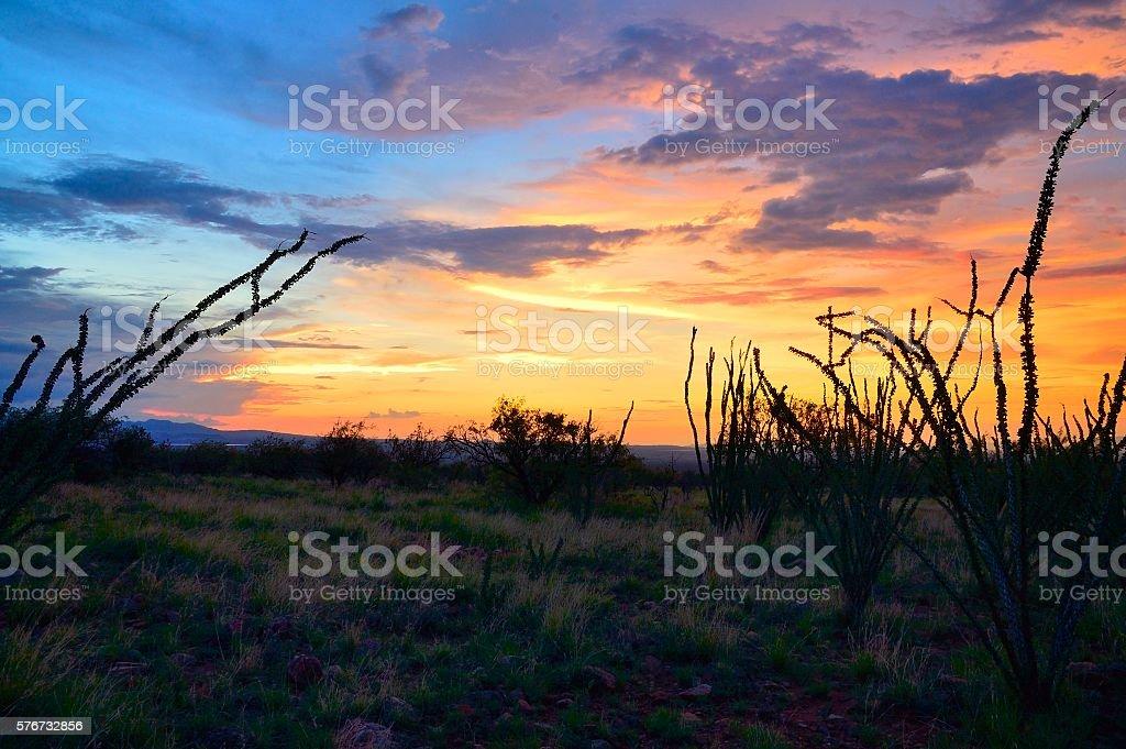 Sornoran Sunset With Ocotillo stock photo