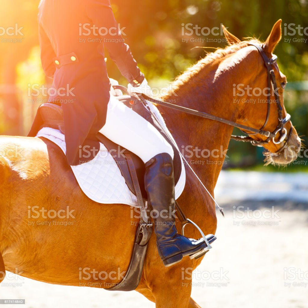 Sorrel horse with rider at dressage competitions stock photo