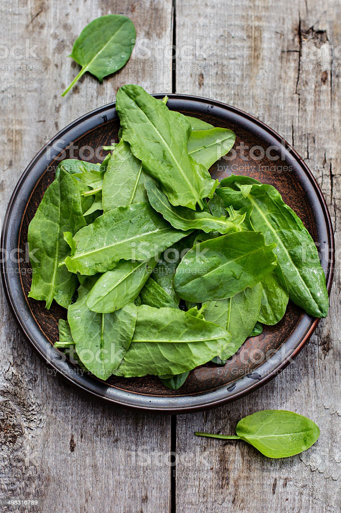 sorrel royalty-free stock photo