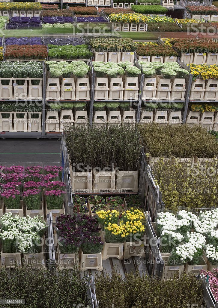 sorted flowers at a Dutch cut-flower auction royalty-free stock photo