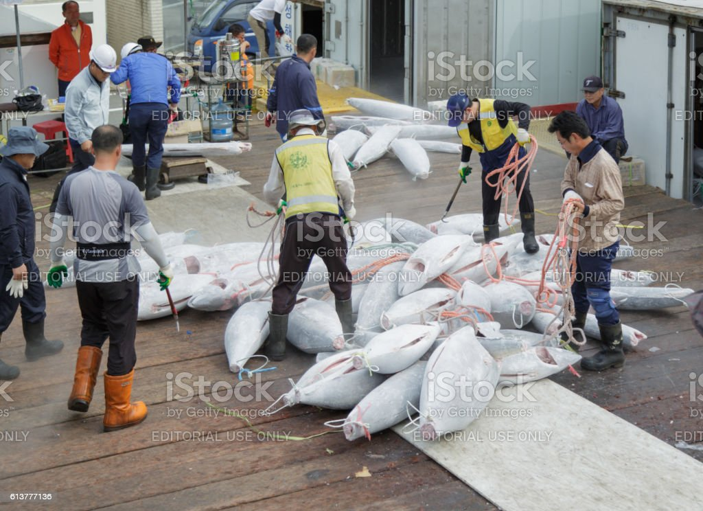 Sorting of hulks of a tuna stock photo