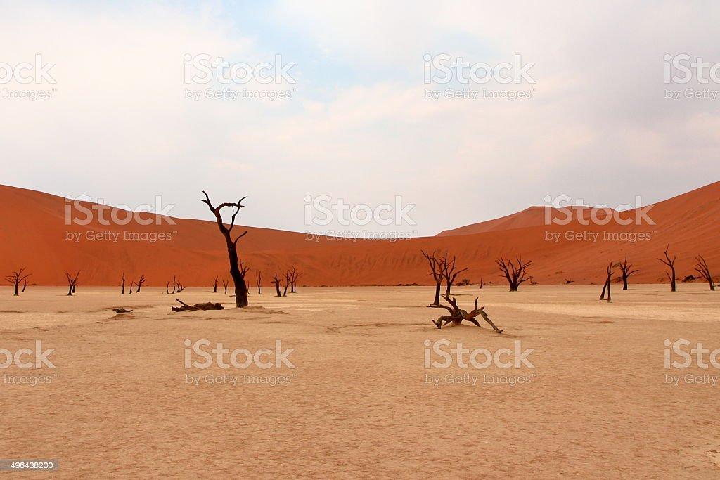 Sossusvlei: dead acacia trees in the Namib Desert, Namibia stock photo