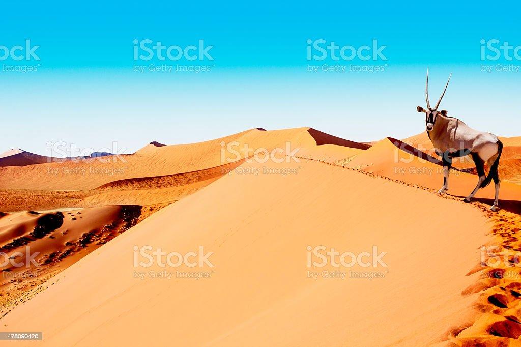sossusvlei dunes oryx stock photo