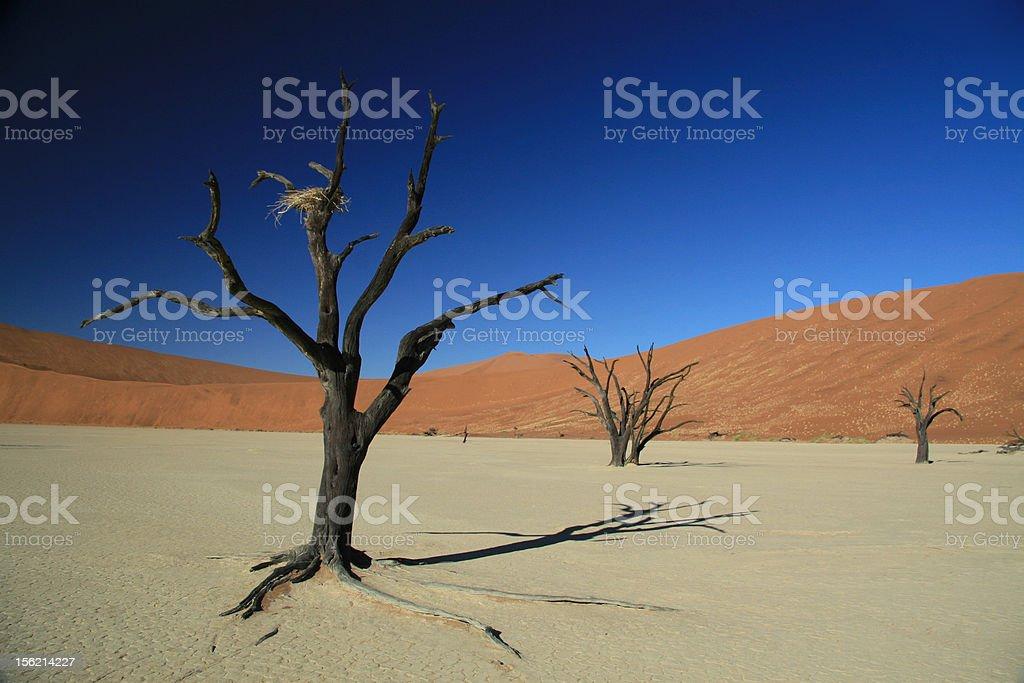 Sossusvlei stock photo