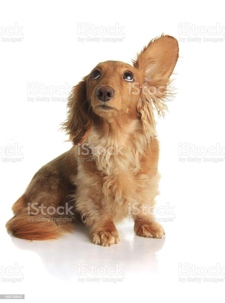 Sound dog stock photo