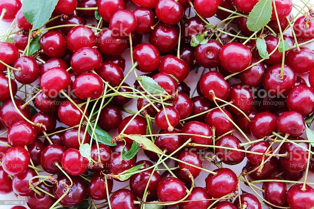 Sour cherries stock photo