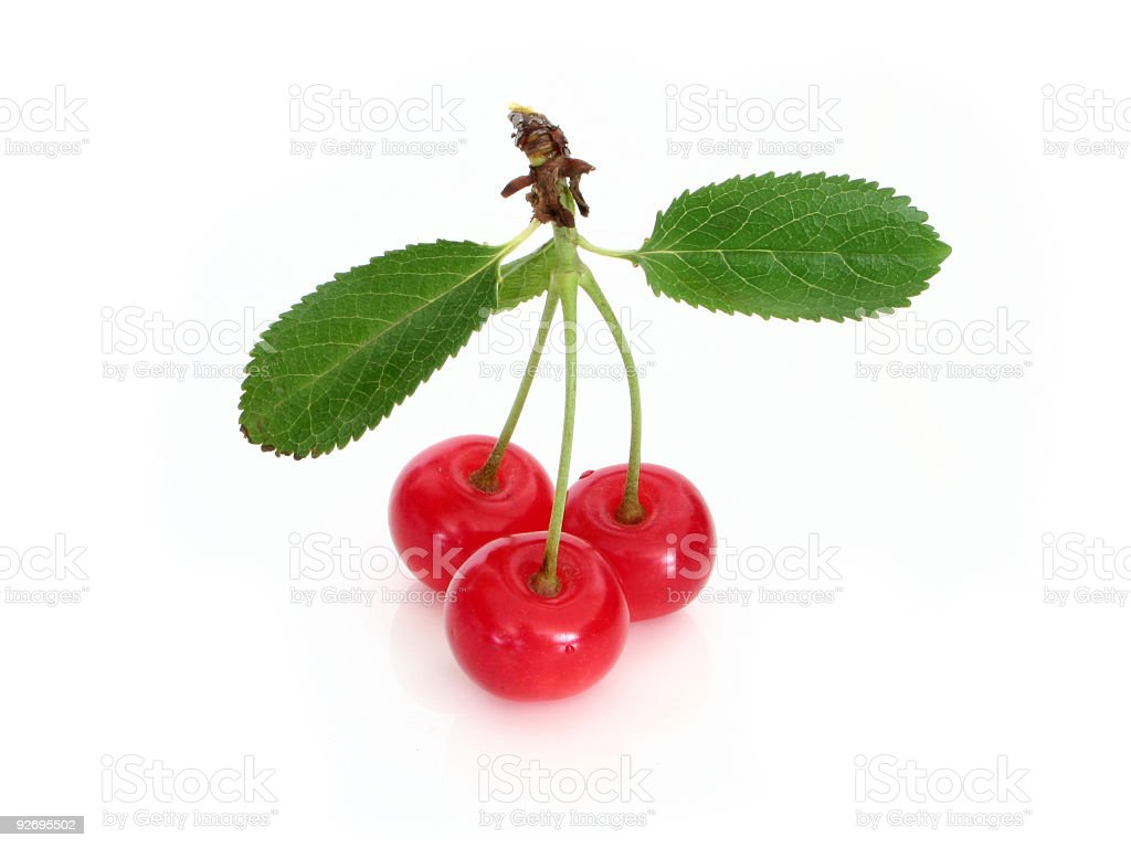 Sour cherry royalty-free stock photo
