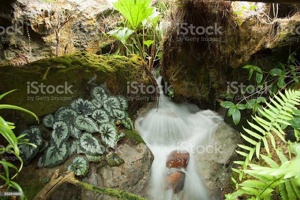 Source of spring in Singapore Botanical Garden stock photo