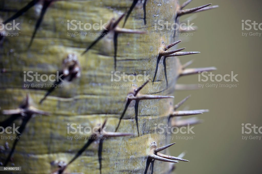 South Africa: Cactus stock photo