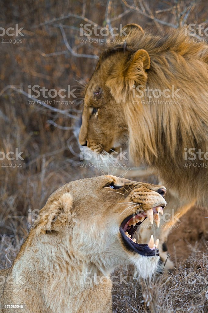 South Africa wildlife stock photo