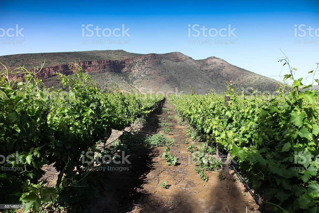 South Africa wineyards stock photo