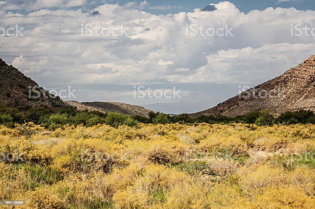 South African Bush Land royalty-free stock photo