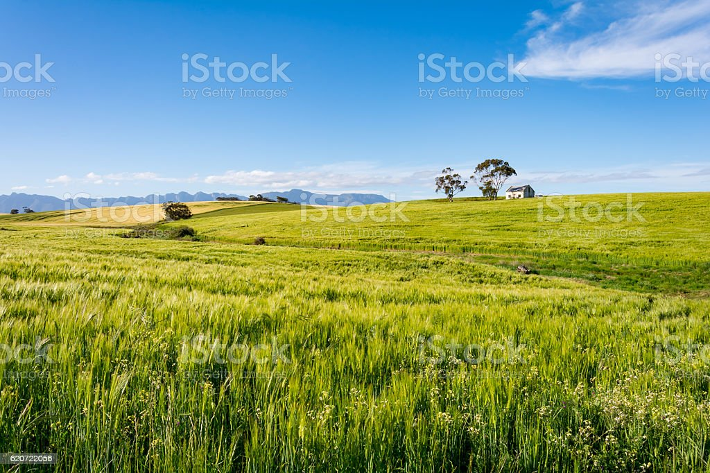 South African Farmland and Meadows close to Hermanus stock photo
