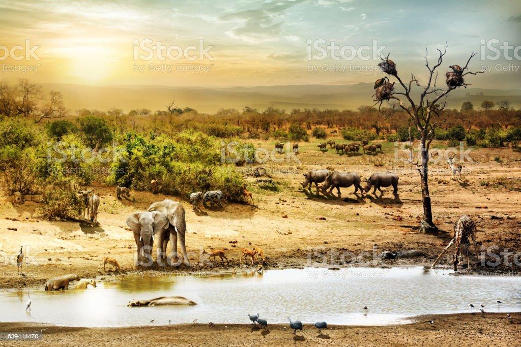 South African Safari Wildlife Fantasy Scene stock photo