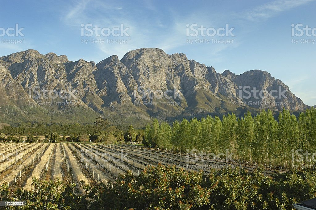 South African Vineyard royalty-free stock photo