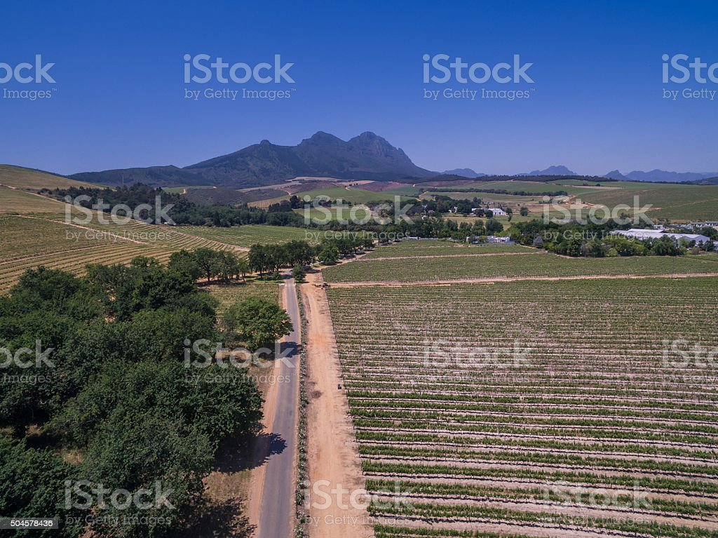 South african vineyards stock photo