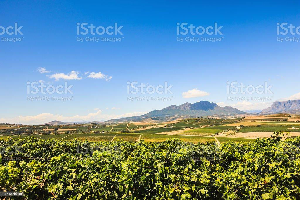 South African Wine-Growing Region Stellenbosch Cape Town Area stock photo