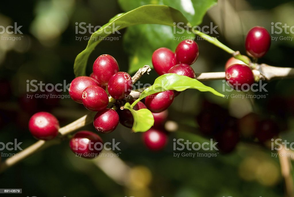 South American Coffee stock photo