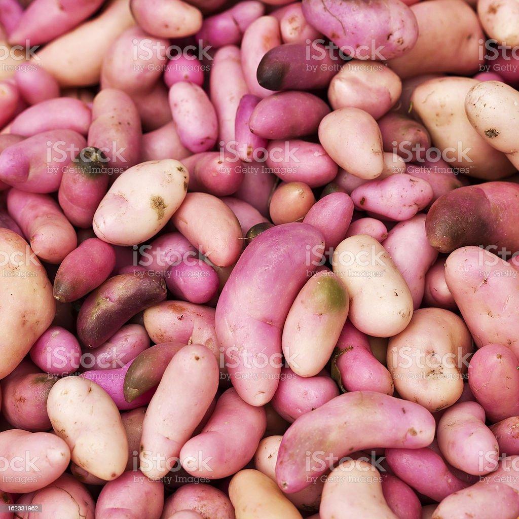 South American Potatoes royalty-free stock photo