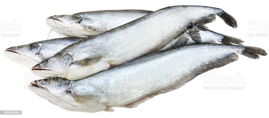 South Asian Boal fishes stock photo