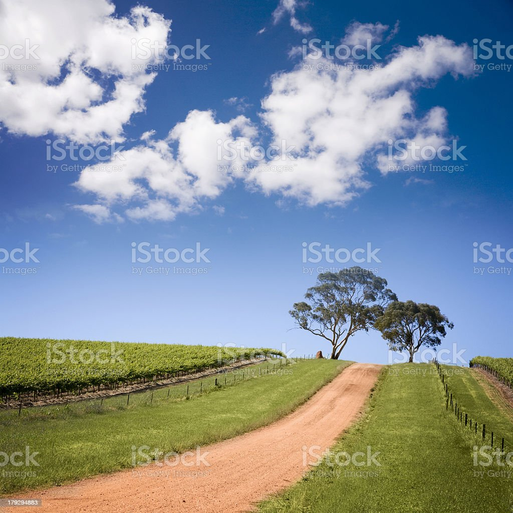 South Australian Vineyard royalty-free stock photo