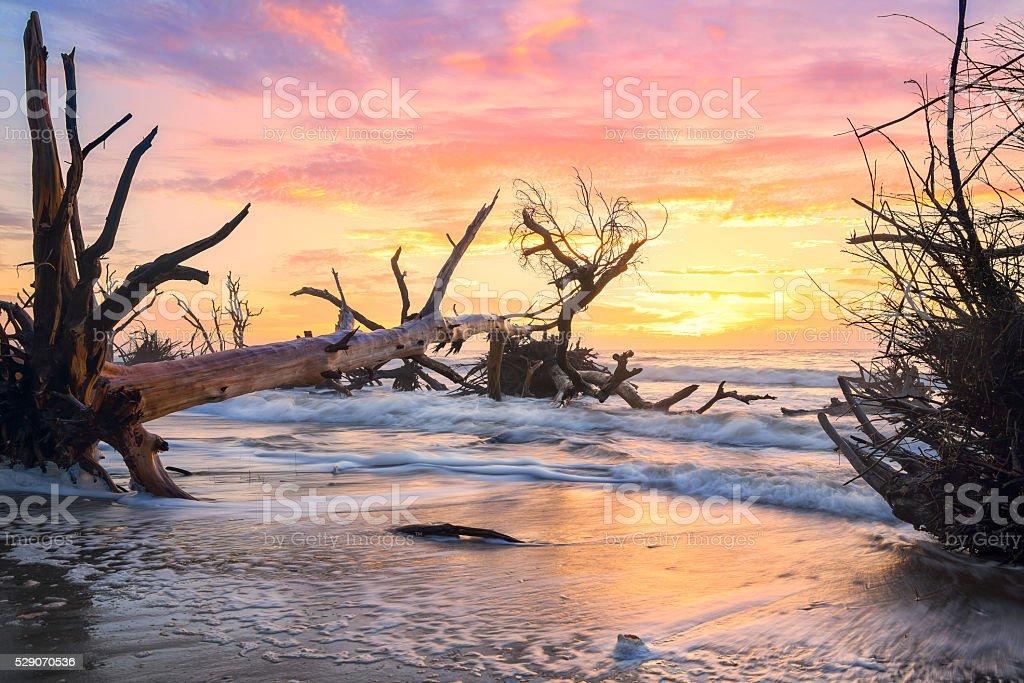 South Carolina Lowcountry Dead Tree Boneyard Beach Sunrise Edisto Island stock photo