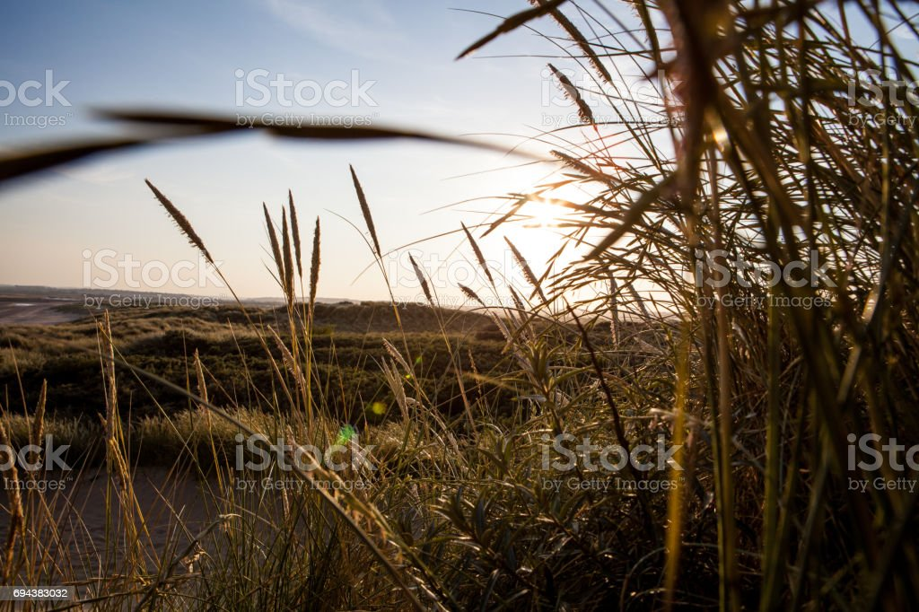 South coast of England reed just before sundown stock photo