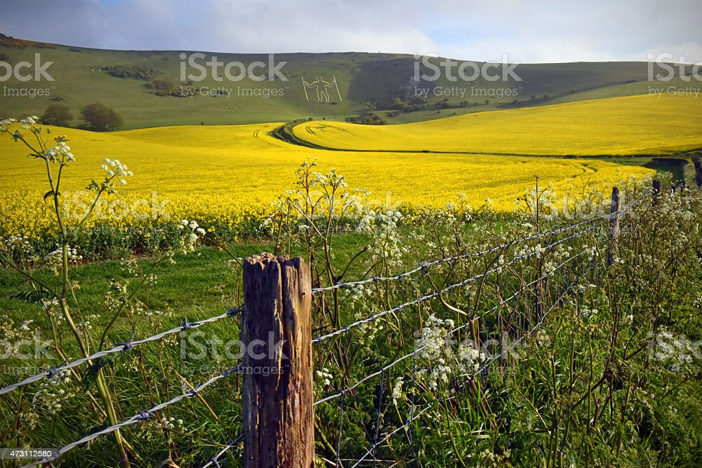 South Downs Chalk Giant stock photo