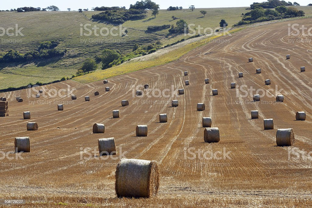 South Downs harvest stock photo