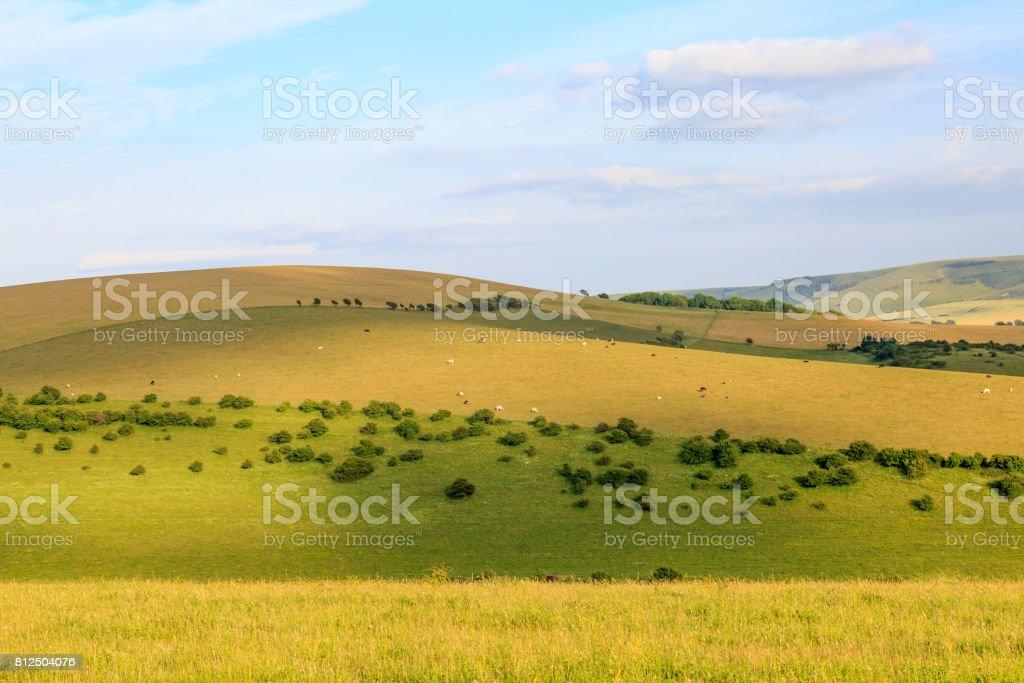 South Downs Landscape stock photo