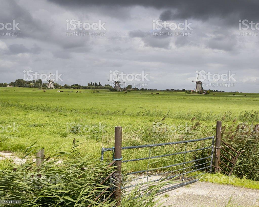 South Holland pastureland - and three windmills stock photo