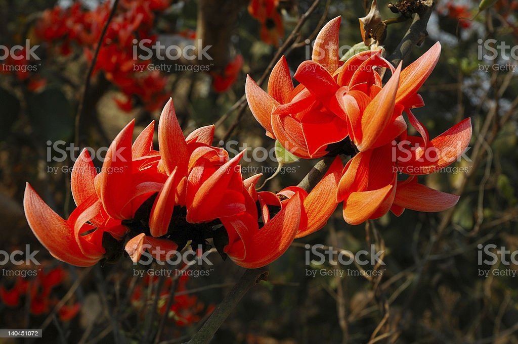 South Indian Autumn flower stock photo