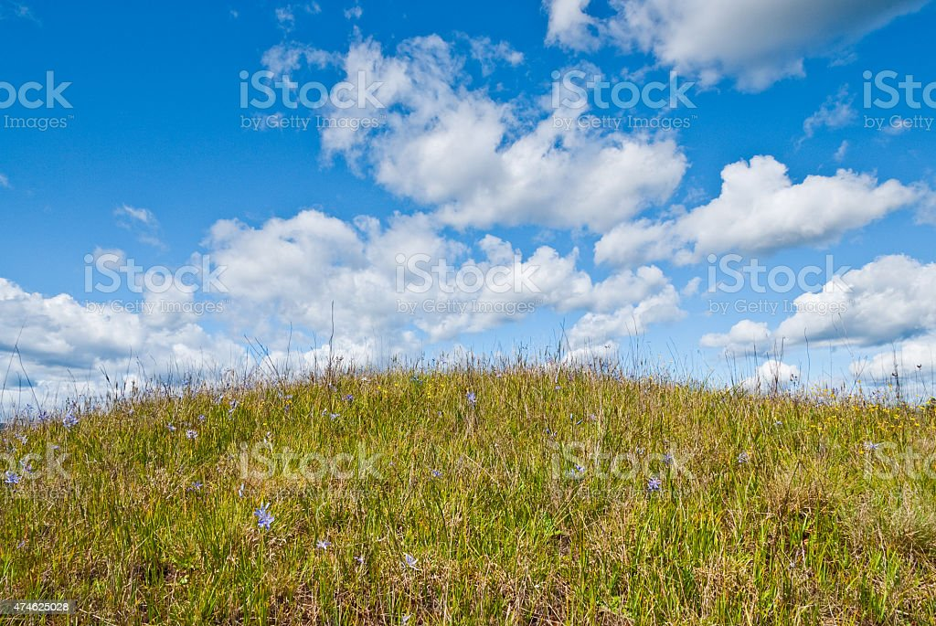 Prairie in Bloom Under Blue Sky stock photo