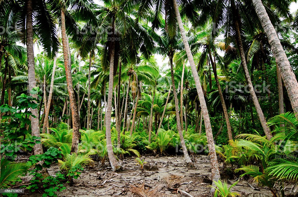 South Pacific Rain Forest Jungle stock photo