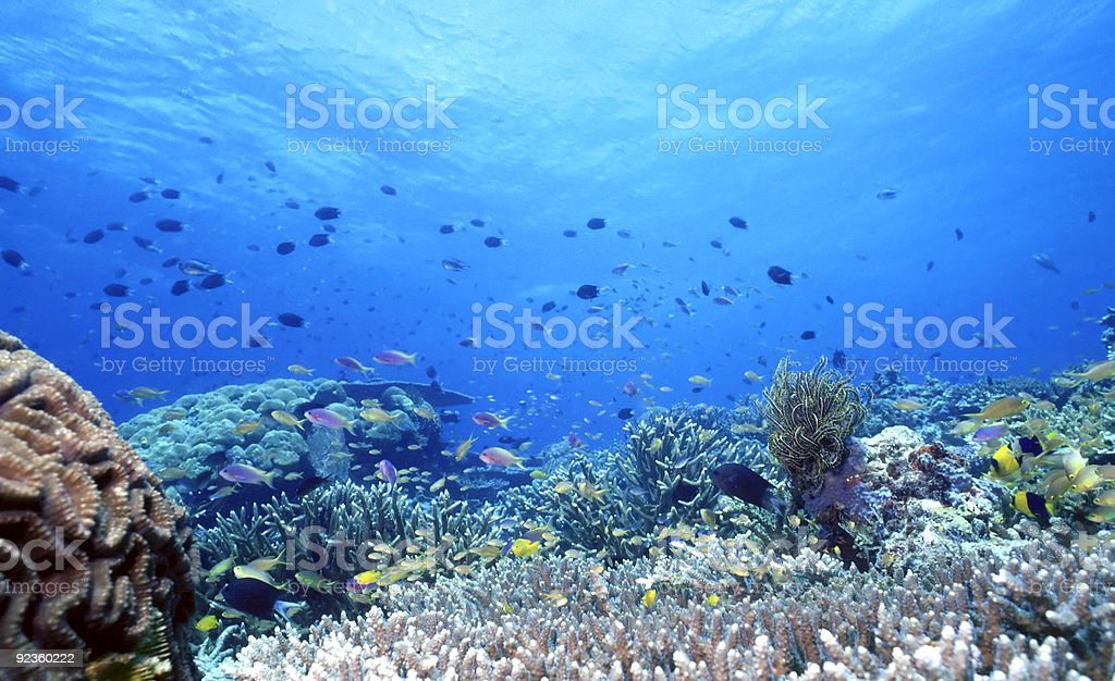 South Pacific Shallow Reef royalty-free stock photo