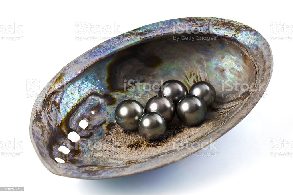 south see pearls in a shell royalty-free stock photo