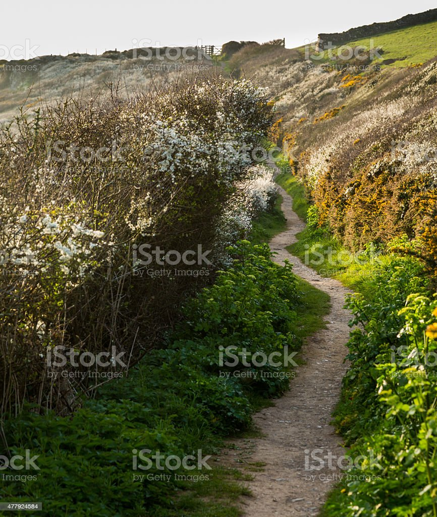 South West coast path near Port Quin, Cornwall stock photo