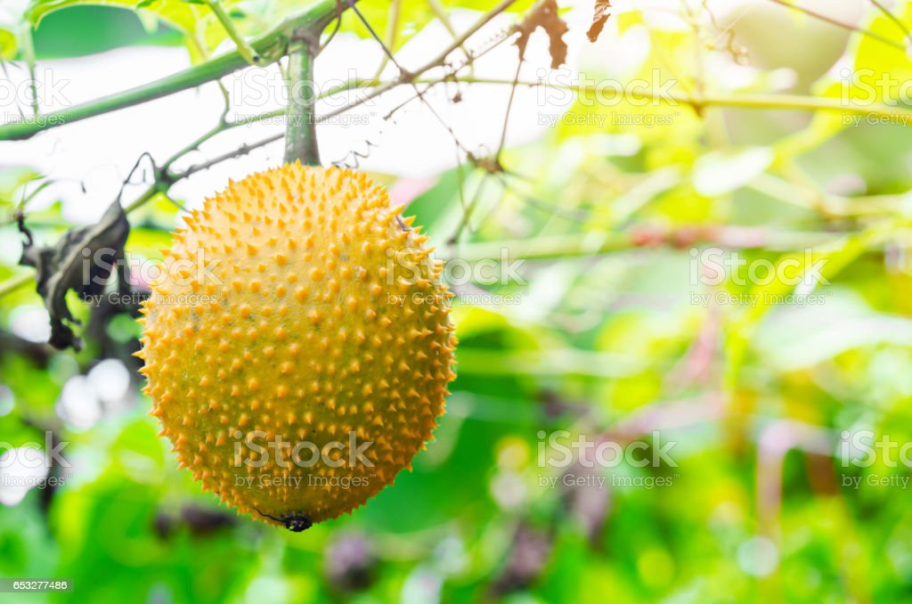 Southeast Asian fruit stock photo