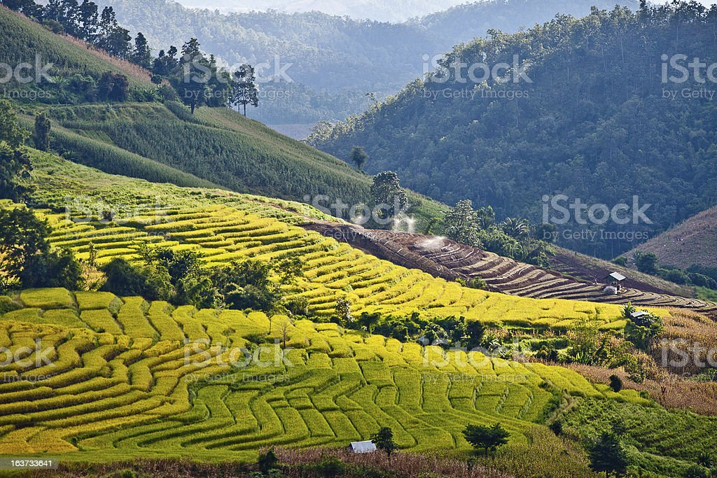 Southeast Asian rice field terraces in Thailand . royalty-free stock photo
