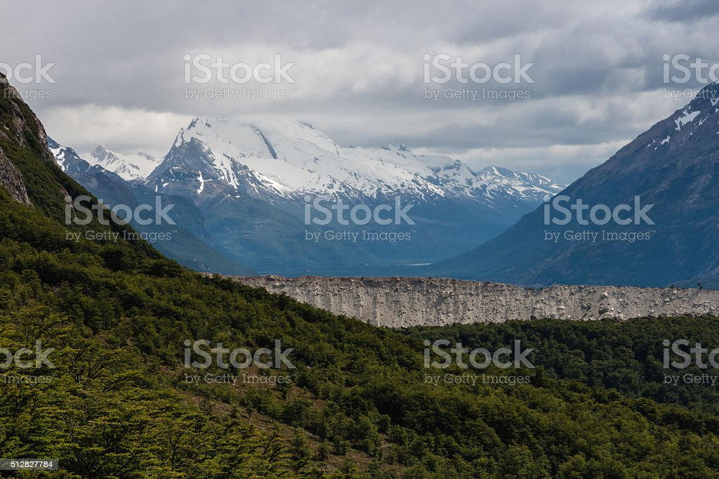 southern beech forest in Los Glaciares National Park stock photo