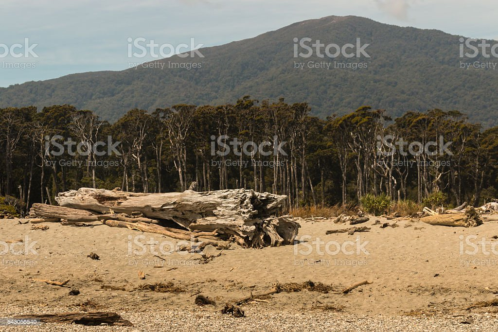 Southern beech rainforest on West Coast of New Zealand stock photo