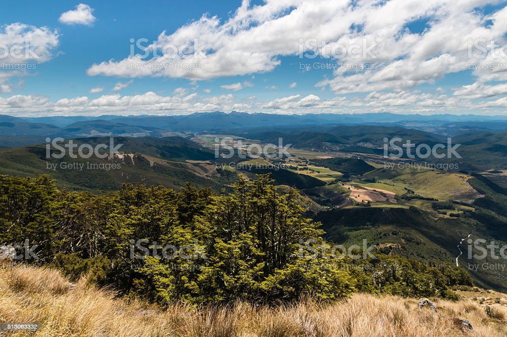 Southern beech trees forest in New Zealand stock photo