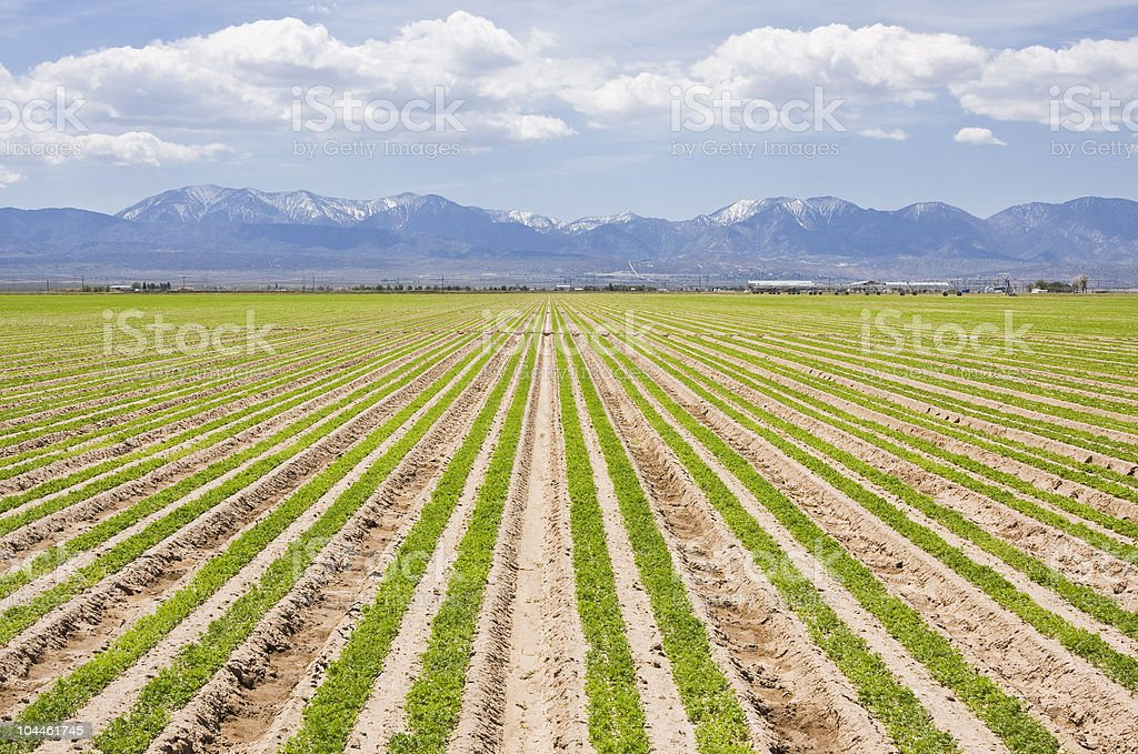 Southern California Farm royalty-free stock photo