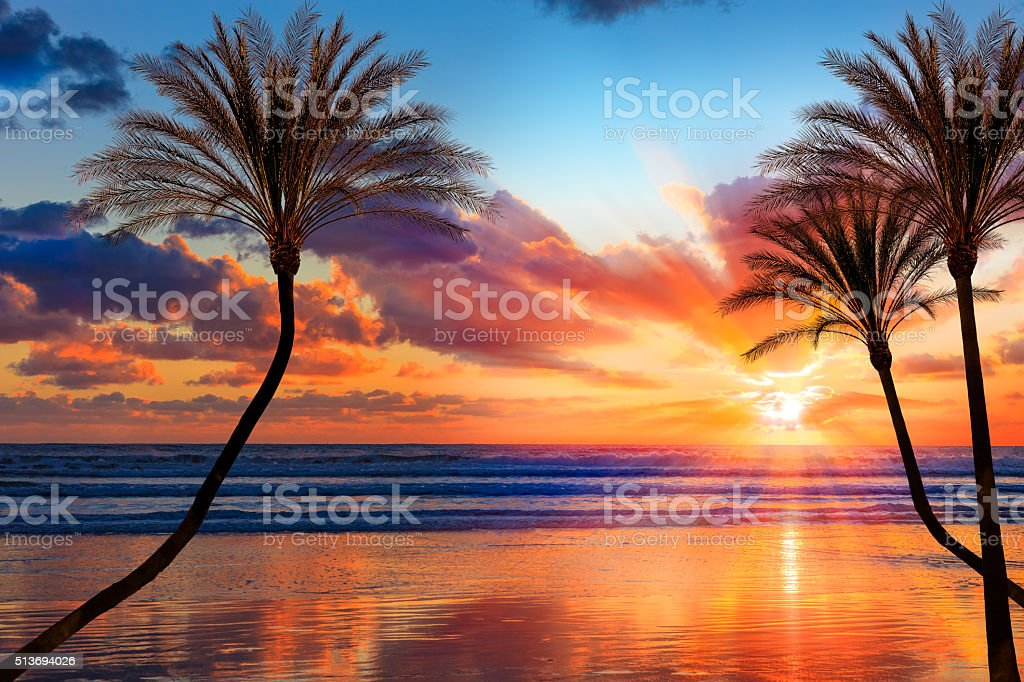 Southern California sunset beach with backlit palm trees stock photo