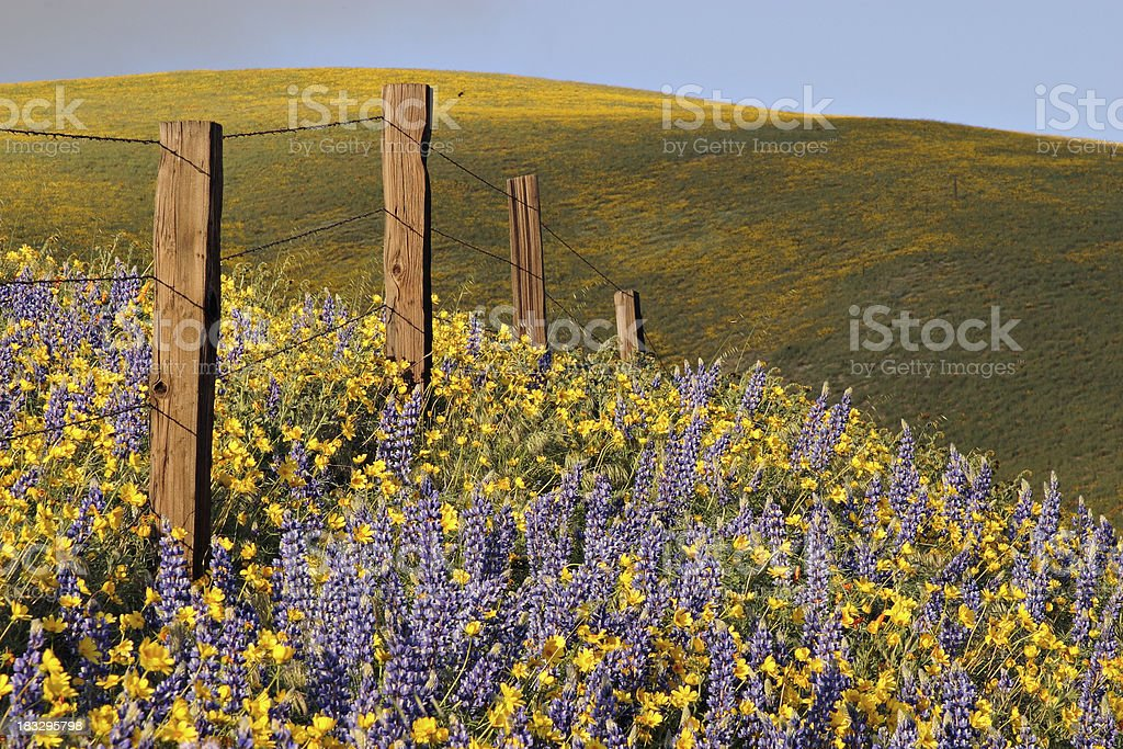 southern California wildflowers royalty-free stock photo