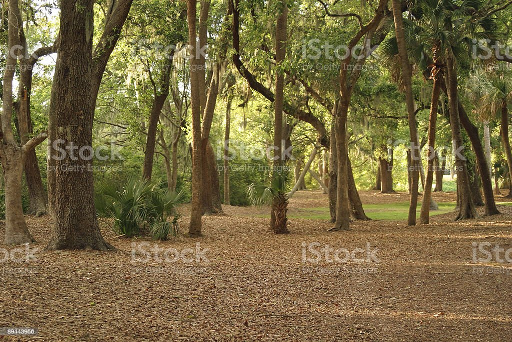 Southern Forest royalty-free stock photo