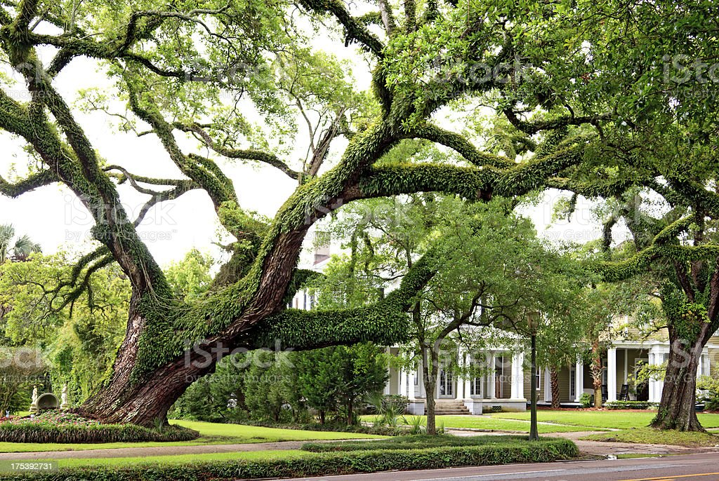 Southern Mansion in Mobile Alabama stock photo