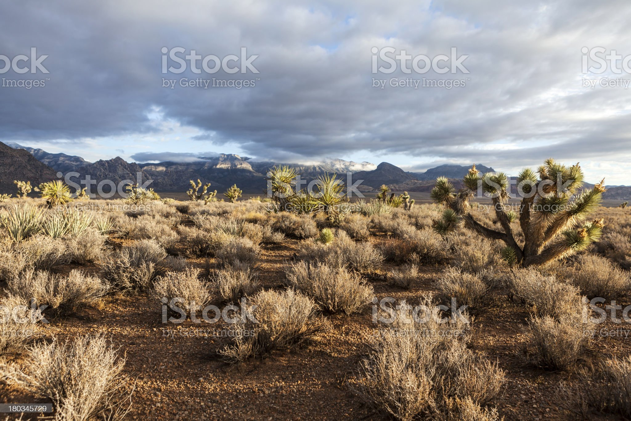 Southern Nevada Mojave Desert Morning royalty-free stock photo
