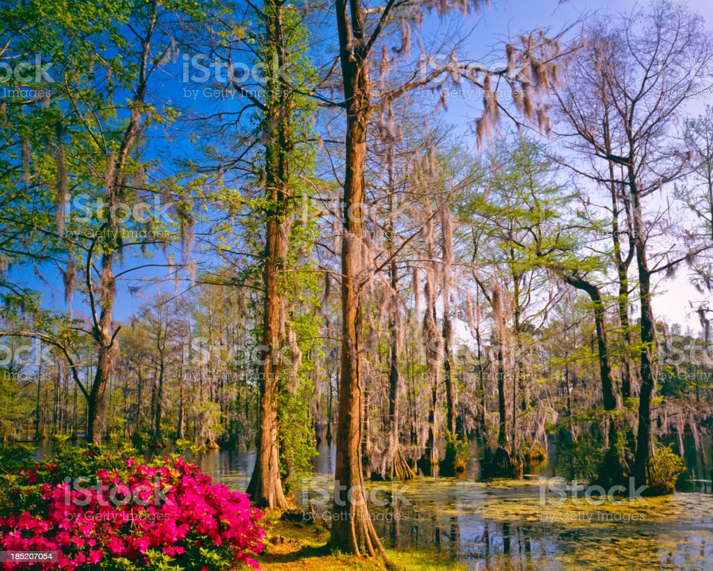 Southern Woodland Garden  (P) royalty-free stock photo